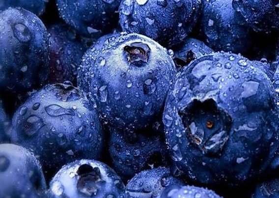 Wild Alaskan Blueberry